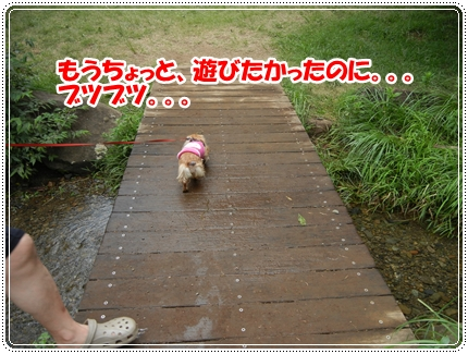 dc071954.jpg