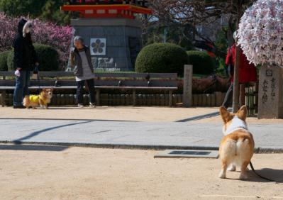 amishiki_106.jpg