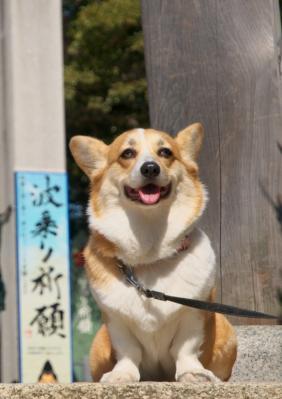 amishiki_116.jpg