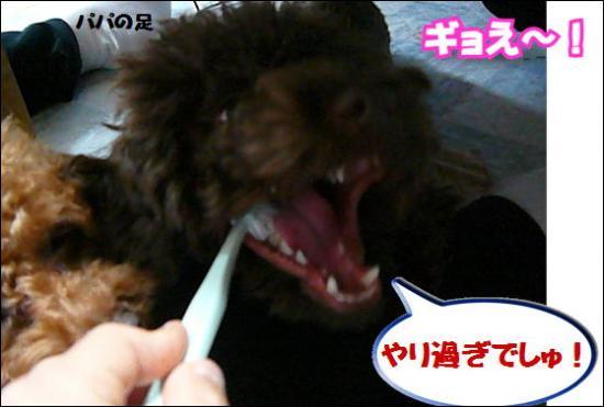 008 歯磨き④.550