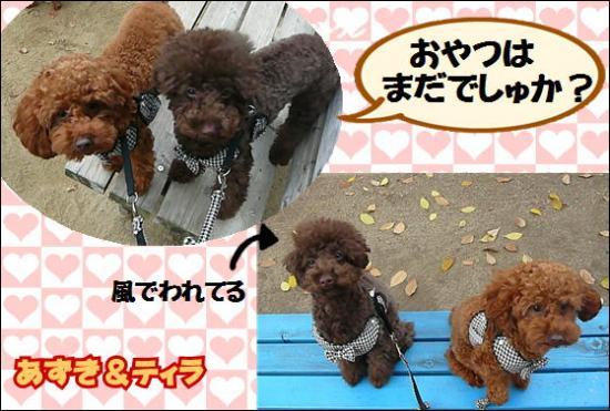 0010 あずき&ティラ.550