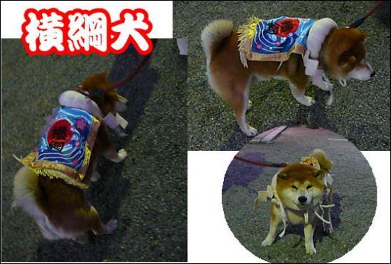 0002 横綱犬.JPG550