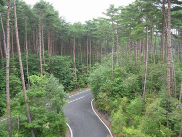 剣丸尾の赤松林
