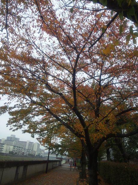 2010/11/14町内清掃活動