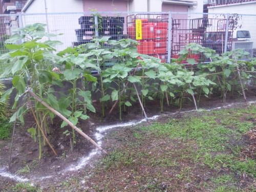 2011-06-26農業班1