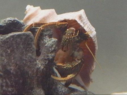ヤドカリの食事動画 画像