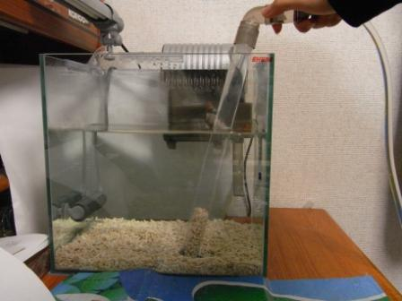 水換え 底砂掃除
