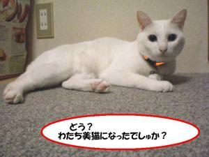 美猫プリン