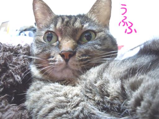 nekonohi20110222.jpg