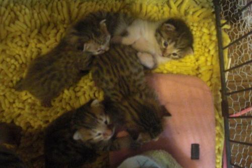 2010年12月14日『仔猫達』