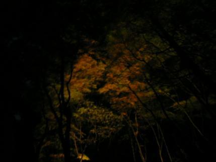 035_20101113231230.jpg