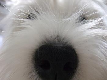 ブレスの鼻
