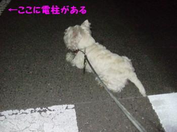 ベイビーの散歩