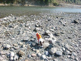 川でし。byたまこ