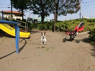 公園でし~。byたまこ