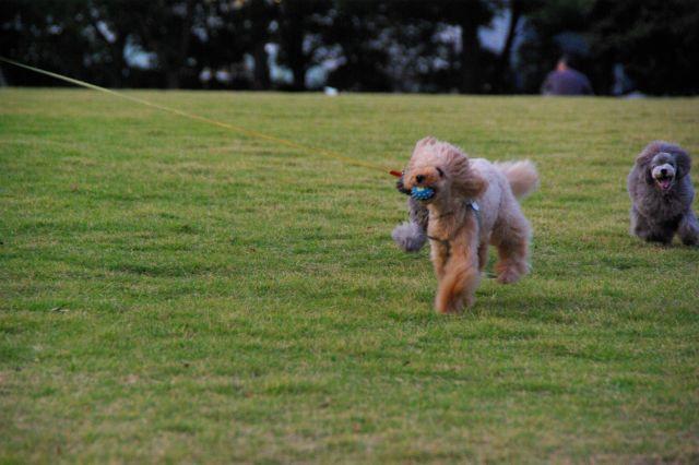 公園runrun 006