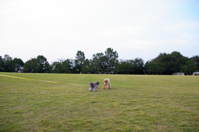 公園runrun 126