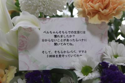 2011-0525-junjunmessage01.jpg