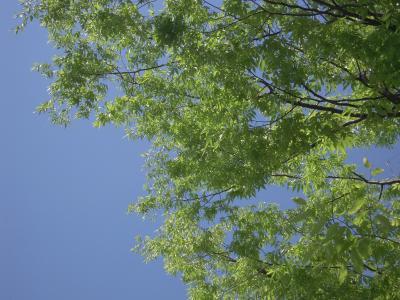 2011-0525-sinryoku01.jpg
