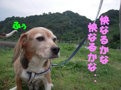 ai-20110707-atumi01.jpg