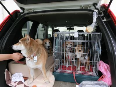 beagles-20111008-konta02.jpg