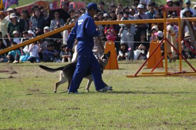 dog-20111009-nakasu01.jpg