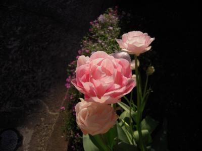 flower-2011-spring.jpg