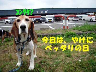 freeai-20110618-odekake04.jpg