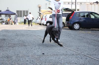 musashi-20111008-konta01.jpg