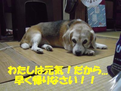 rookie-20110719-jikka01.jpg