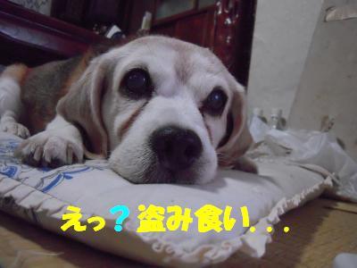 rookie-20110807-jikka01.jpg