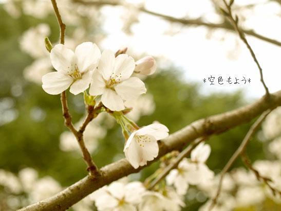ぶろぐ_4106599
