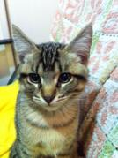 20101214_ミィちゃん