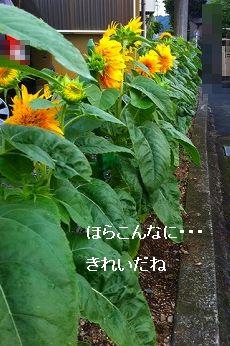 s-20110728235952.jpg