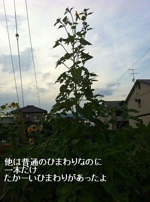 s-20110729000041.jpg
