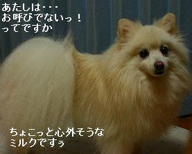 s-IMG_0171_20110830000756.jpg