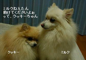 s-IMG_0374.jpg