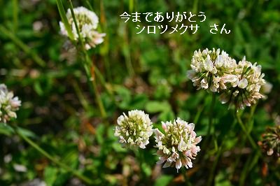 s-IMG_9291.jpg