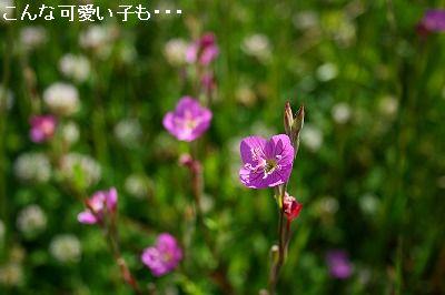 s-IMG_9294.jpg