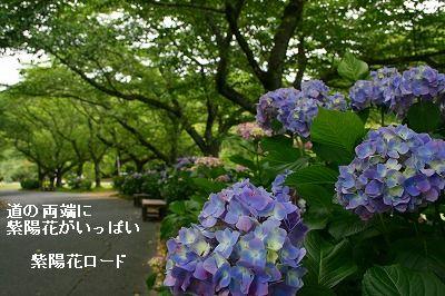 s-IMG_9568.jpg