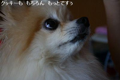 s-IMG_9891.jpg
