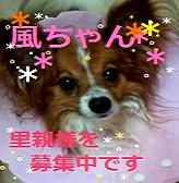 17365508_600808380_152large.jpg