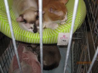 猫さんアパート2