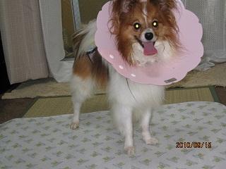 2010.09.15風・退院しました
