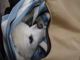バッグの中のジジ