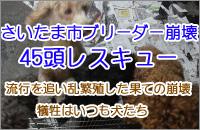 埼玉ブリーダー崩壊