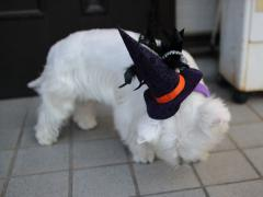 Halloweenhairband1.jpg