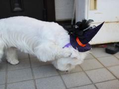 Halloweenhairband2.jpg