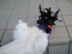Halloweenhairband5.jpg