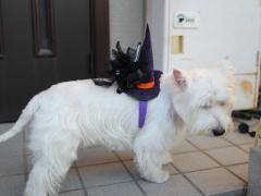 Halloweenhairband6.jpg